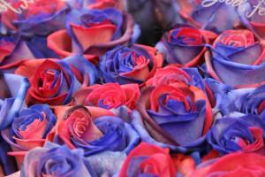 roses blaugrana