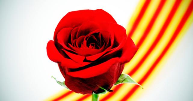 Resultat d'imatges de rosa sant Jordi