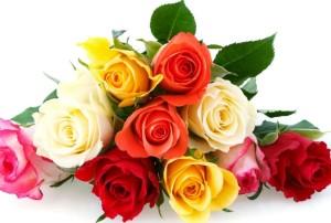tipos-de-flores-bonitas-rosas